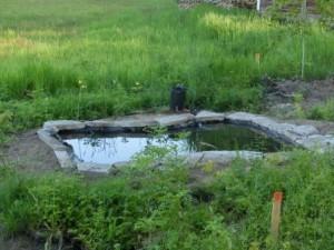 Häpp! Ser ni karpen i dammen?